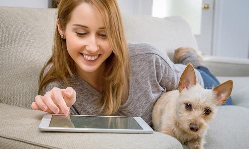 C mo eliminar pulgas y garrapatas en perros y - Pulgas en casa sin animales ...