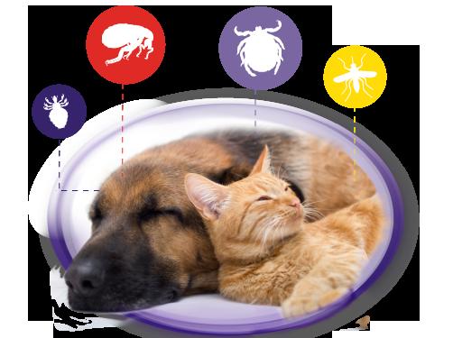 dixie perros y gatos sanos