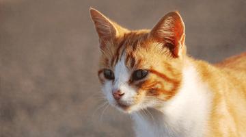 productos para gatos